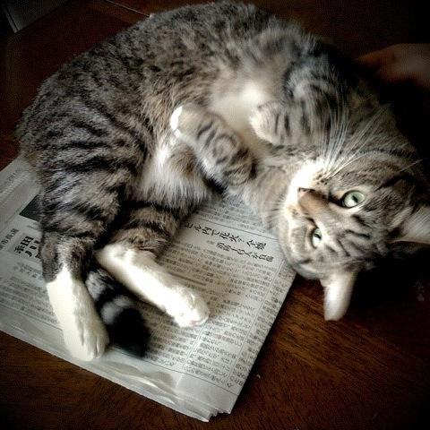 why do cats lay on paper