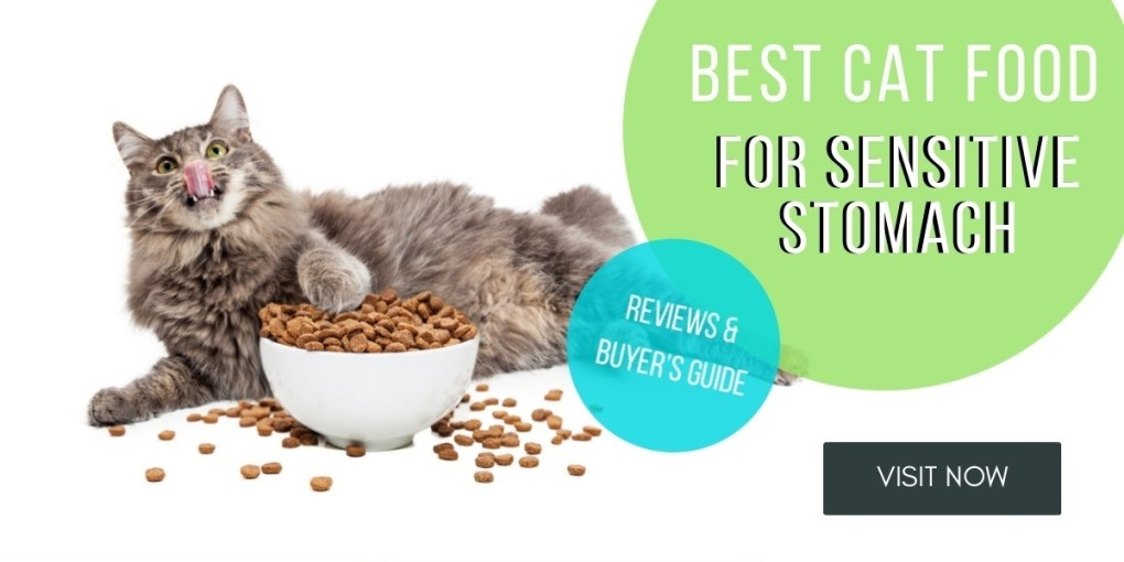 best-cat-food-for-sensitive-stomach