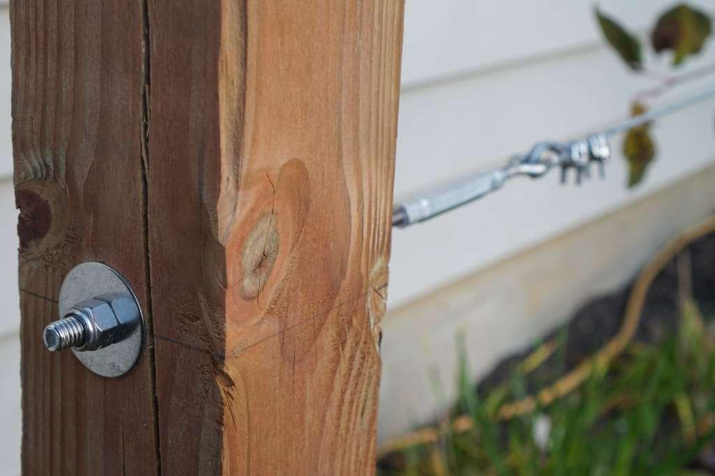 Espalier Cable Anchors_