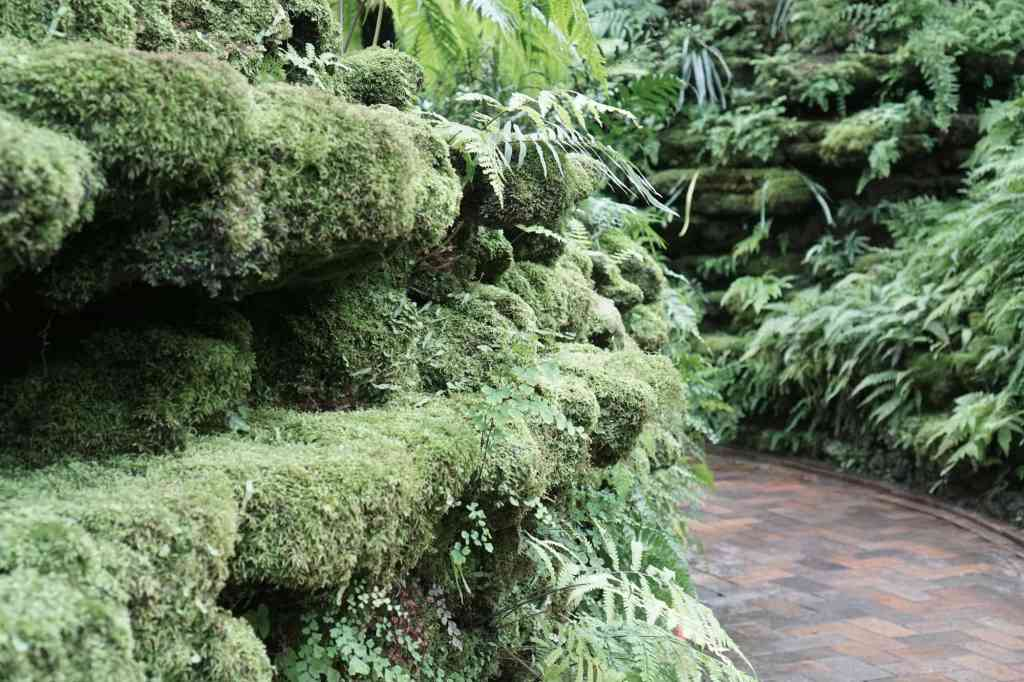 Garfield Park Conservatory moss covered rocks