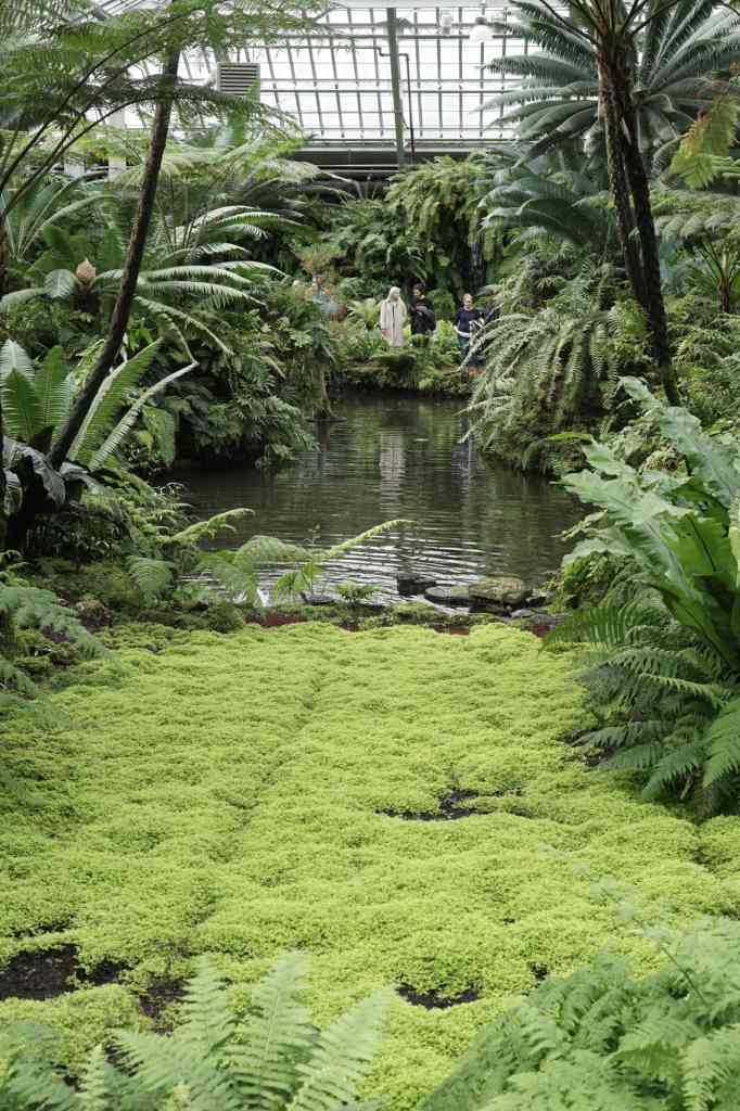 Garfield Park Conservatory Mossy Pond