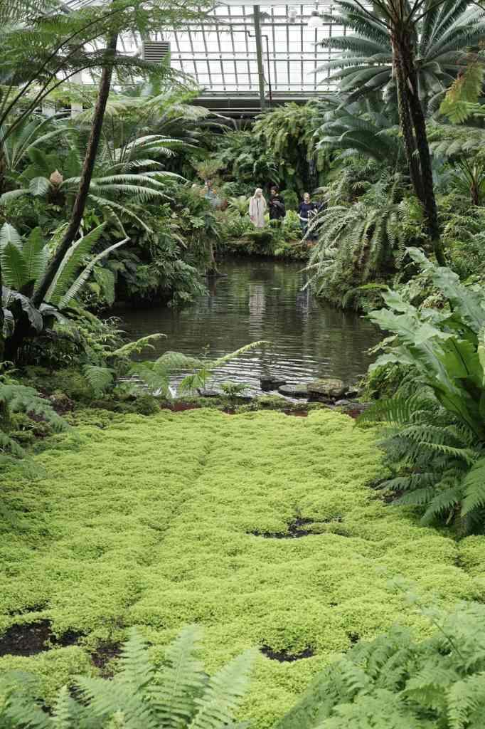 Garfield Park Conservatory Mossy Pond