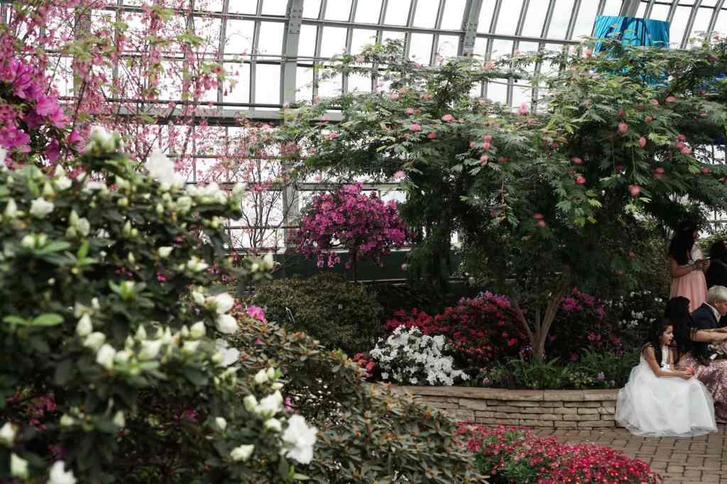 Garfield Park Conservatory Powder Puff Tree