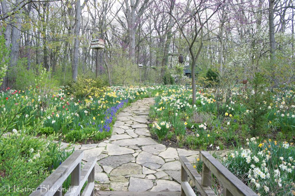 Spring Bulbs Around Flagstone Path