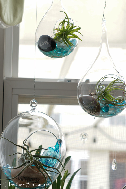 Trio of air plant glasses