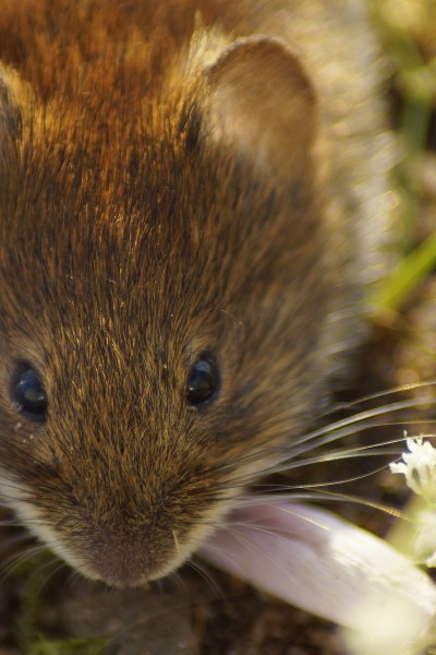 I've Got Voles…Again