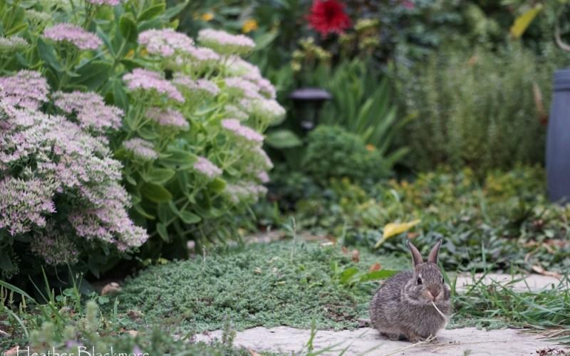 baby rabbit eating plant