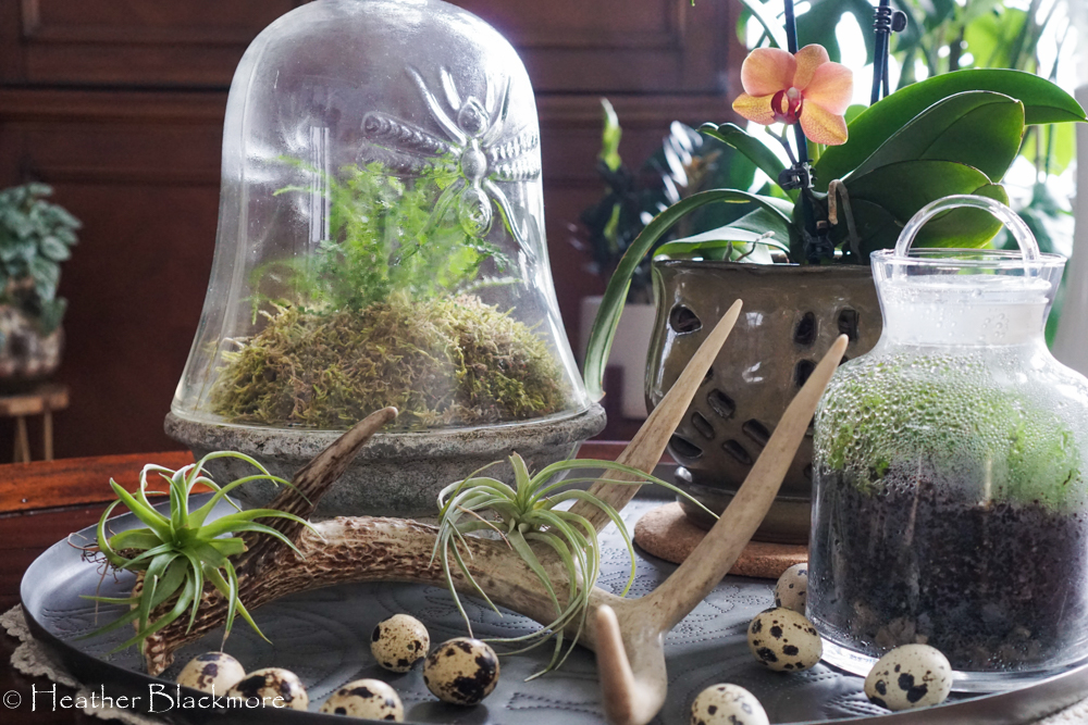 Terrariums on coffee table