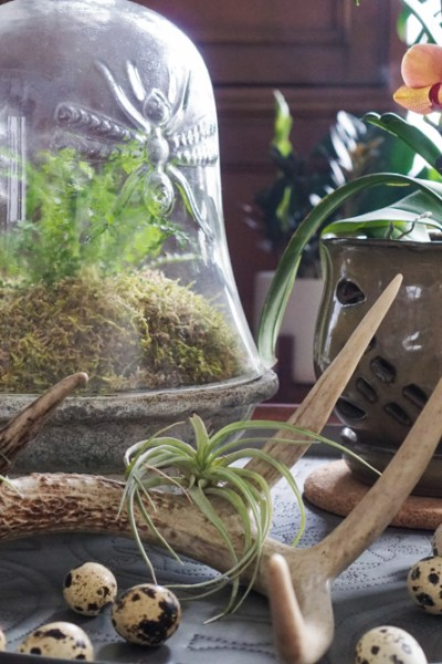 Coffee Tables Are Perfect for Terrariums
