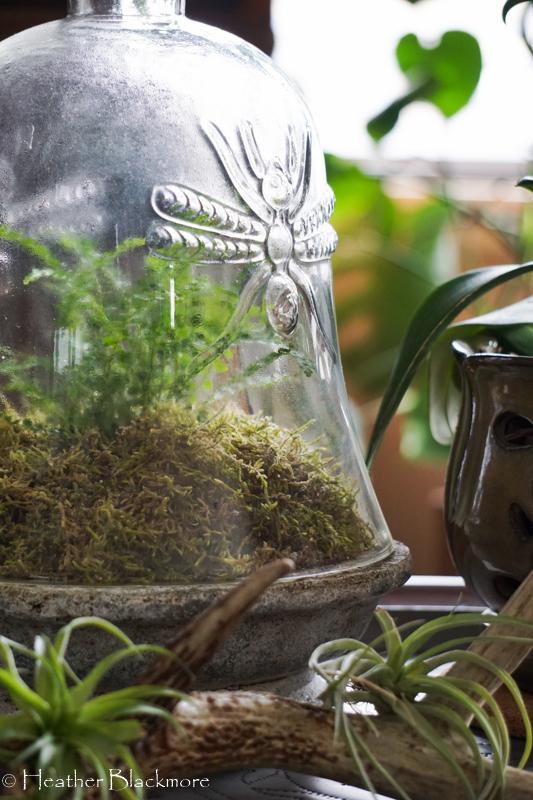 fern under glass cloche