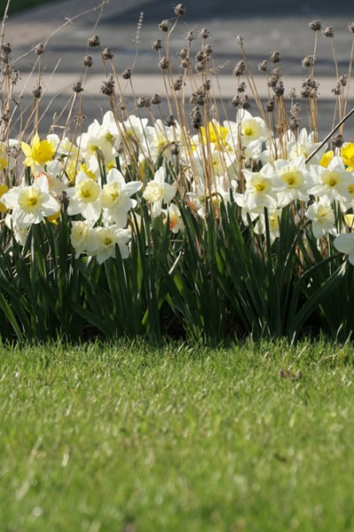 """Letting Go of """"Tidy"""" Spring Garden Cleanup"""