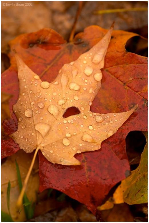 melancholy_autumn