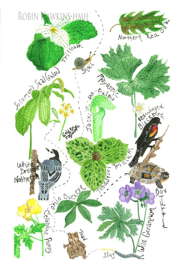 Nature - Fine Art Print.....watercolor print, wildflowers, trees, woodland creatures, trillium, toadstool trillium, red oak, solomon's seal false, mayapple, jack in the pulpit, white breasted nuthatch, box turtle, wild geranium, celadine poppy, toad, slug