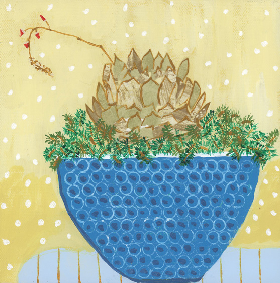 Spruced up Succulent