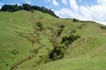 Stream area below Larnach's Castle