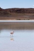 Salt Flat Tour_151