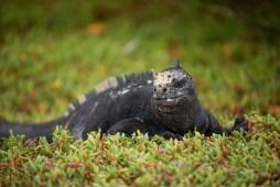 Galapagos_018