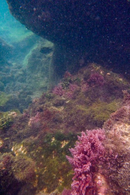 Galapagos_117