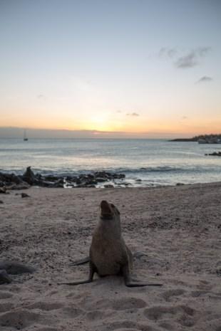Galapagos_409