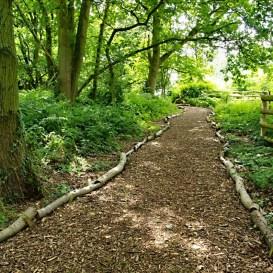Path through the Nunckley Trail
