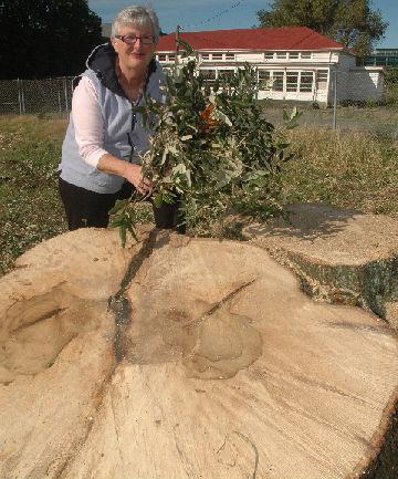 Fallen peace tree