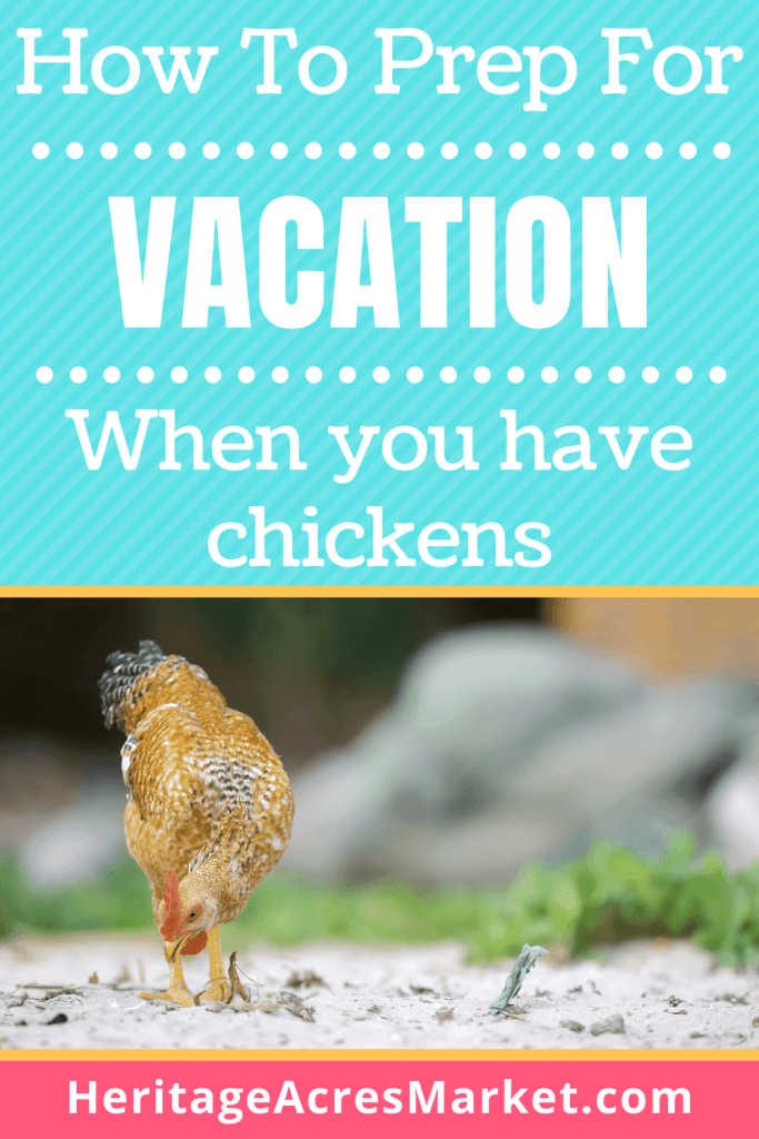 what to do with chickens when on vacation