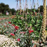 Allotmentitis: How Britain Dug for Victory