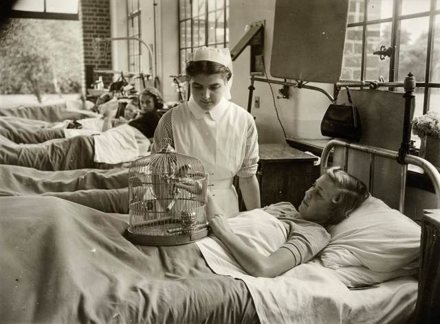 A patient in bed playing with a budgerigar in a cage, whilst a nurse supervises