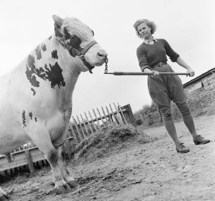 WLA rat catchers, Sussex, 1942. Land Girls Audrey Prickett and Betty Long (in background) plug a rat hole after inserting poison, while Eileen Barry (foreground) lays bait