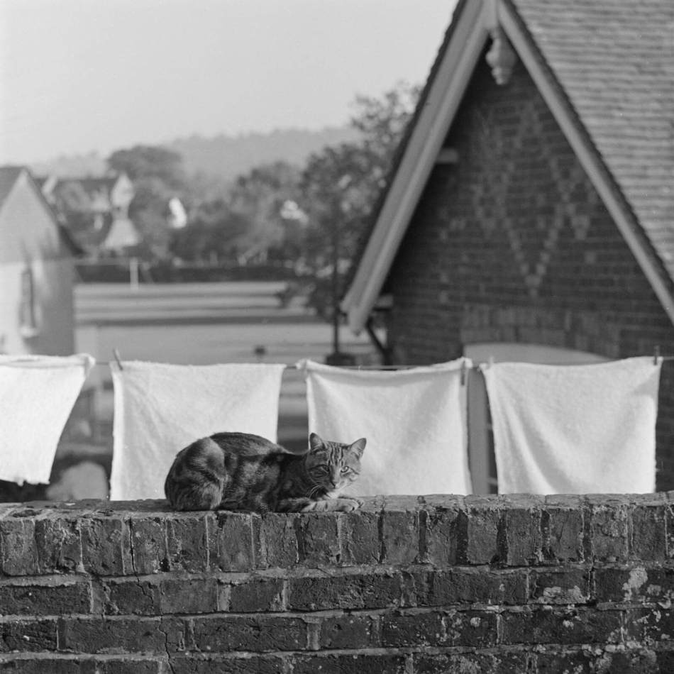 A cat on a brick wall in front of a house and a line of washing, 1964 - 1973