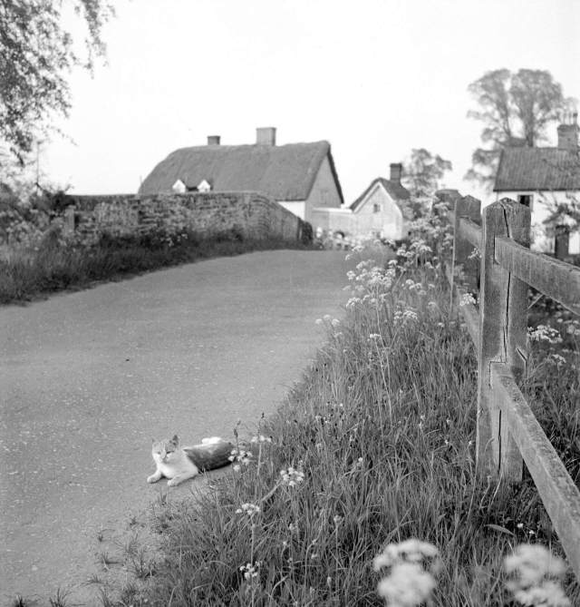 Cat lying on a country road verge in front of a bridge with a brick parapet, looking towards a cluster of houses in the distance, 1950 - 1952