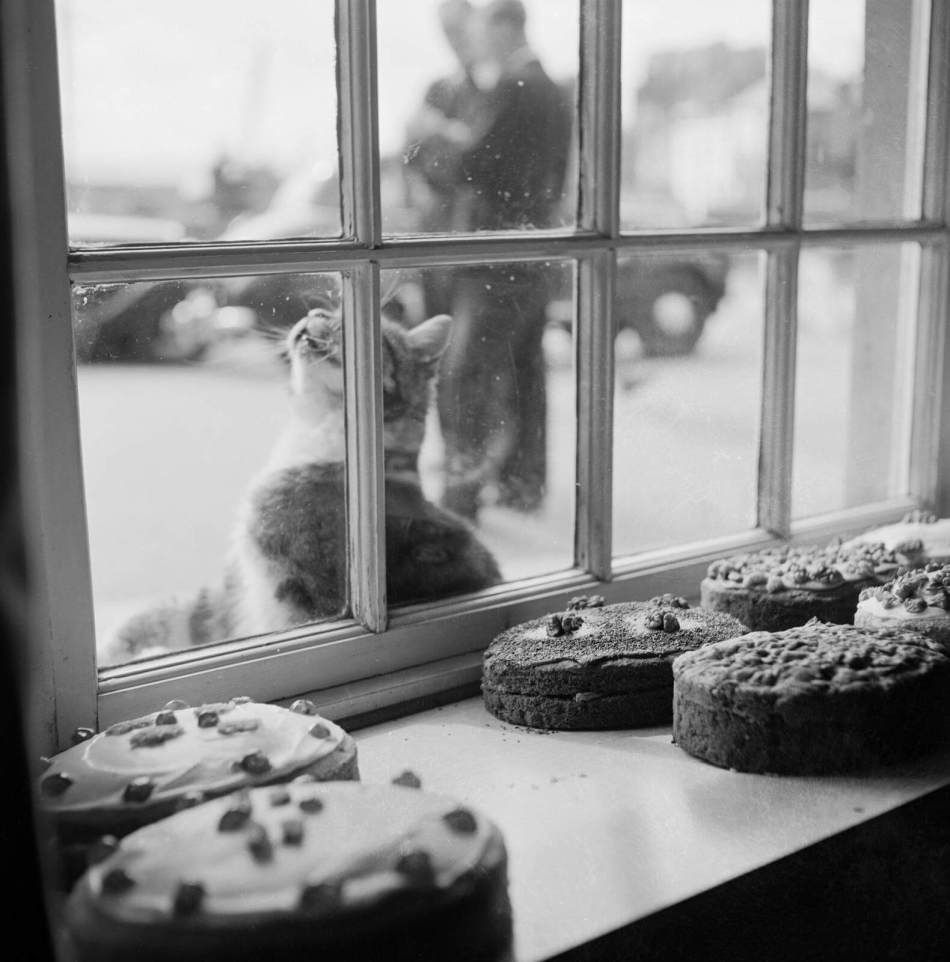View looking out through the window of Claire's cake shop in Padstow, with finished cakes on display in the foreground and a cat resting on the window sill outside, 1956