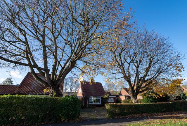 Houses in Peartree Lane with two large trees outside