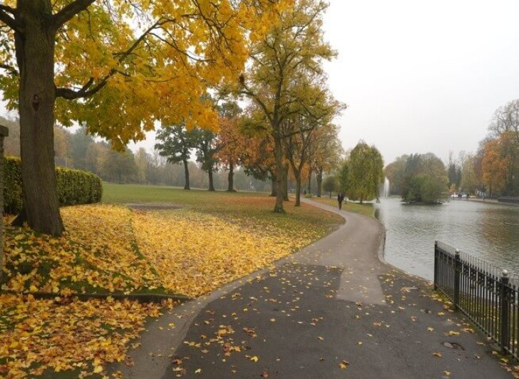 Path through a park, with trees on one side and a lake on the other. The trees have orange leaves which have fallen on the path.