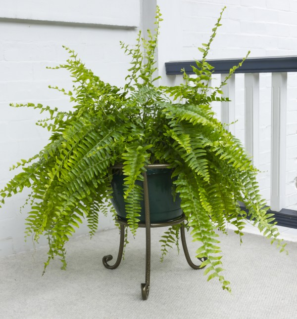 low iron flower pot stand
