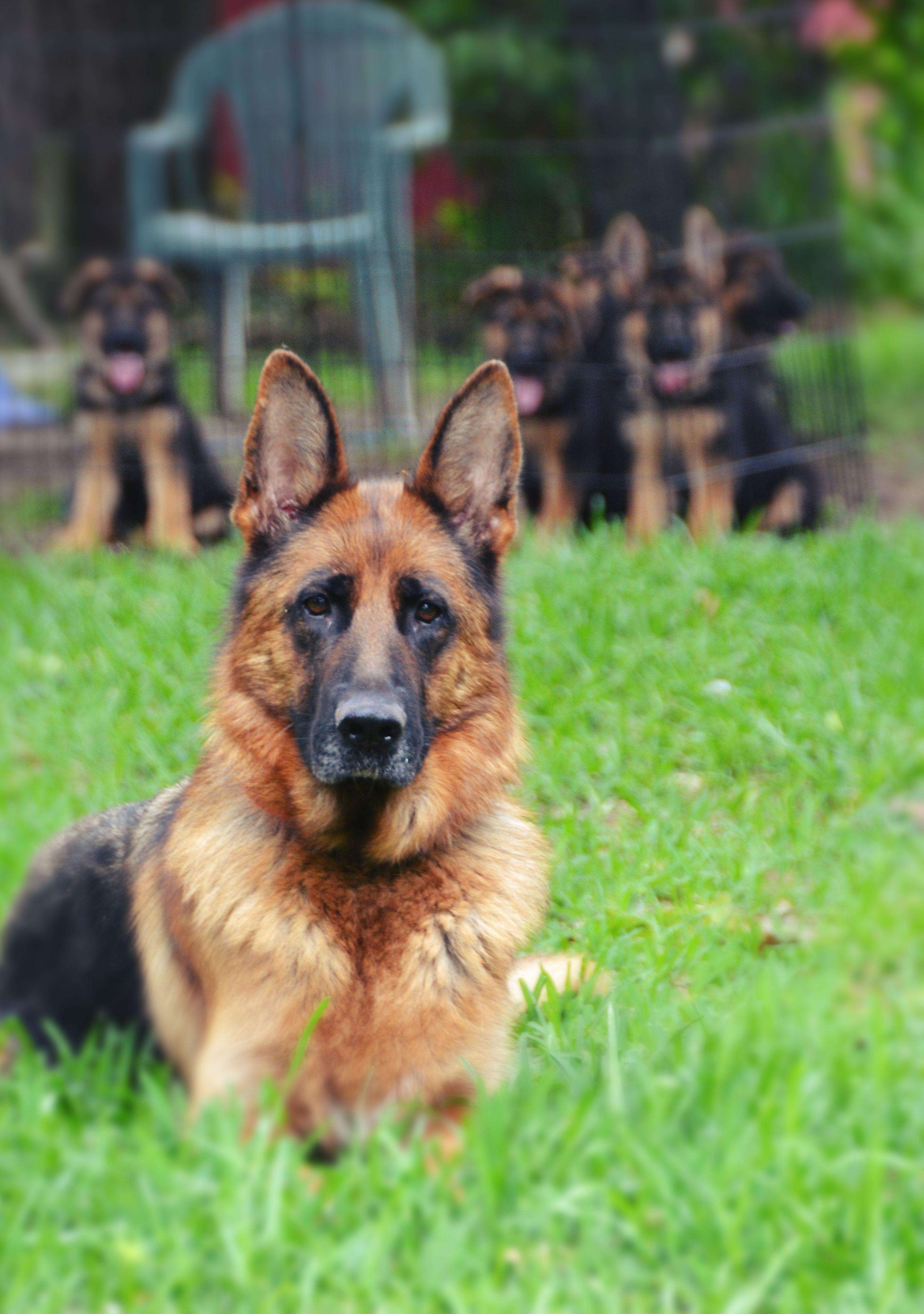 Good Dog Houston Houston Tx