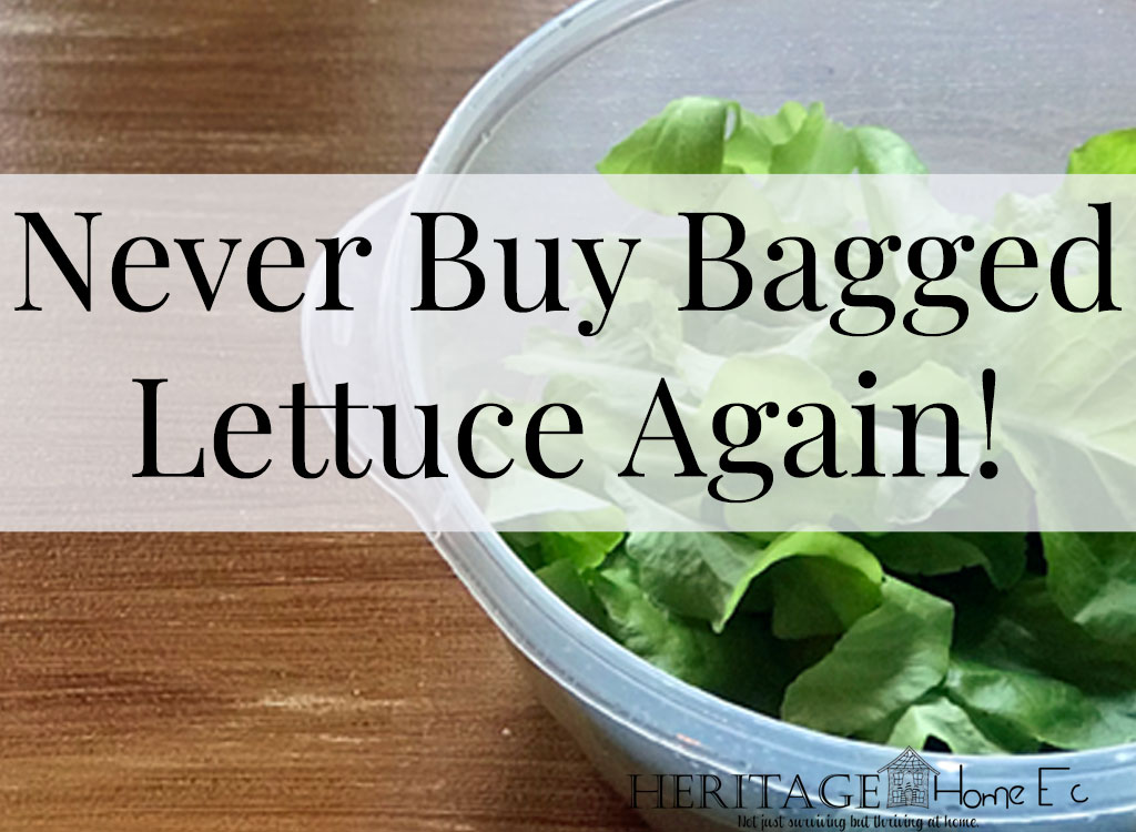 Year-Round Fresh Lettuce- Heritage Home Ec Tired of wasting money buying lettuce at the store? Here's how we have fresh lettuce year-round without ever buying it at the store. | Garden | Lettuce | Budget | Home Economics |