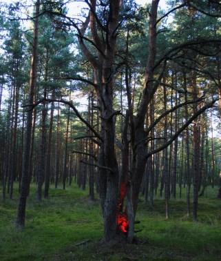 tree-glow-2