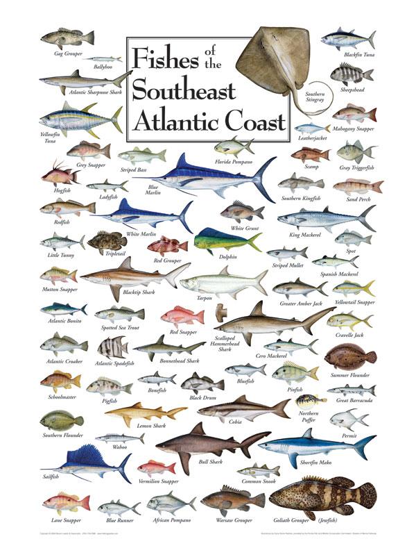 Gulf Coast Fish Identification Chart