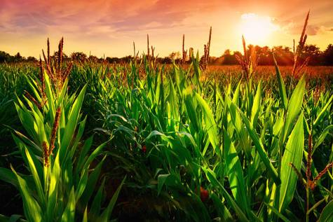 Corn Changing Weather Patterns