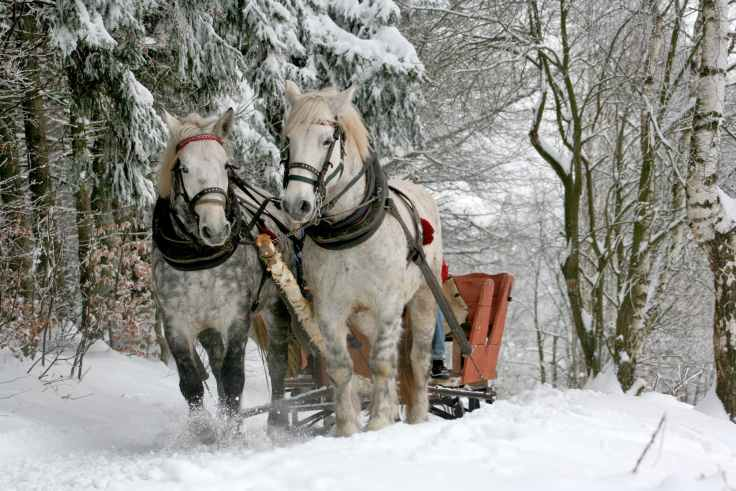 sleigh-ride-horses-the-horse-winter.jpg