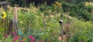 An easy spring garden for Herkimer Village