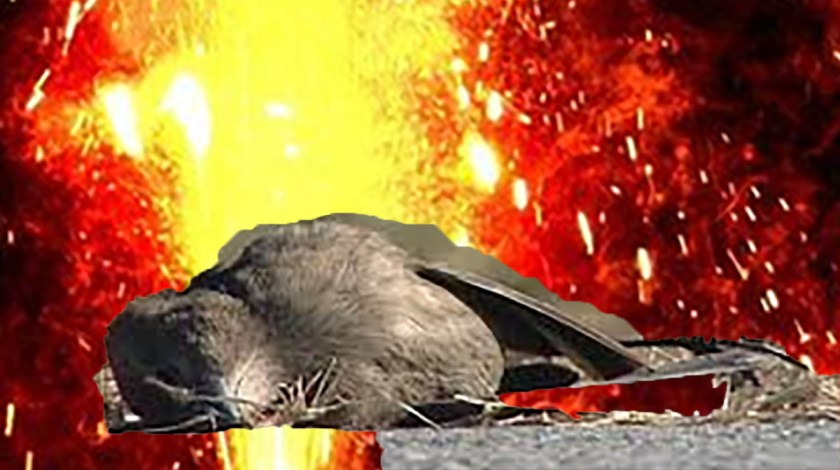 Fireworks Cause Bird Deaths and Blazes
