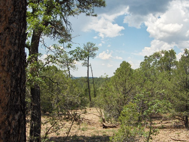 Cibola National Forest Five private acres