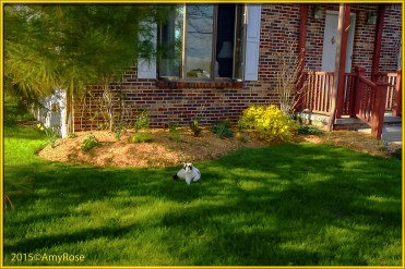 Front Garden with Echo