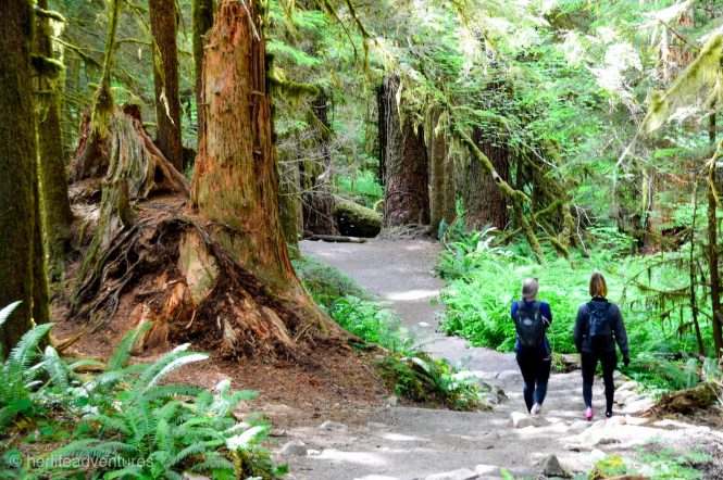 Everything you must know before visiting Olympic National Park in Washington, USA. Hikes, campgrounds, and the best stops for your road trip.   Her Life Adventures   #olympic #nationalpark #usadestinations #washington #hikes #thingstodo #roadtrip #lodging #itinerary #guide