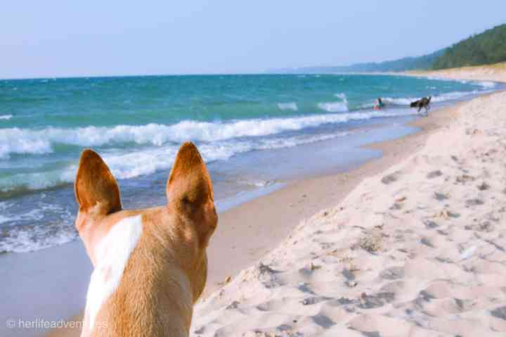 Warren Dunes State Park Pet Friendly beach