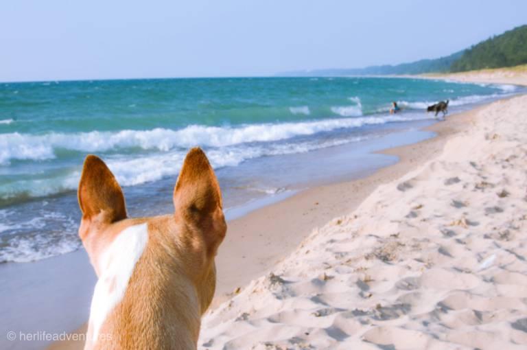 Warren Dunes State Park Pet Friendly beach