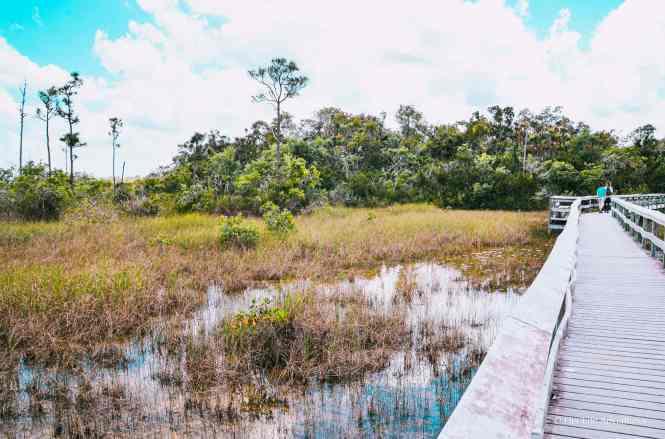 River of Grass Everglades National Park Walkway