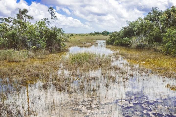 Everglades National Park Wetlands | herlifeadventures.blog | #everglades #nationalpark #florida #travel #destinations